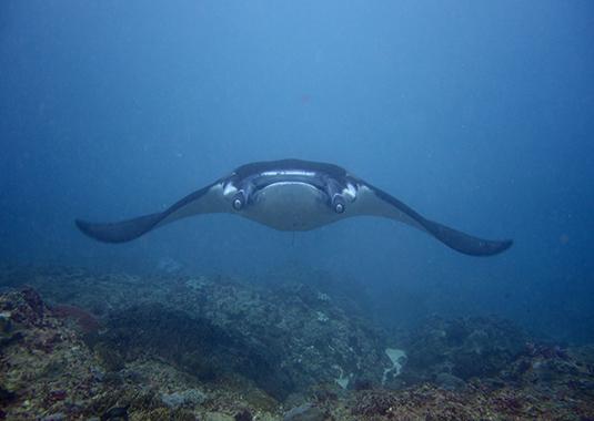 Indonesia-Nusa Lembongan-Meeting Marine Megafauna