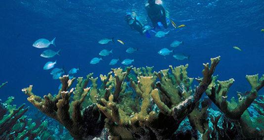 Voyage à destination de Indonésie - Introduction à la reconstruction du récif.