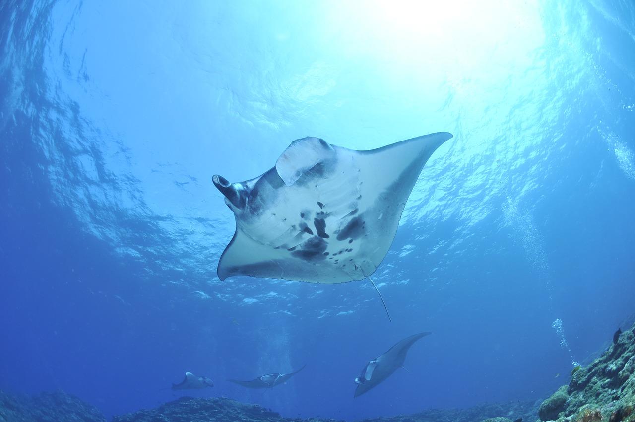 Sea-Heritage-Lembongan-Manta