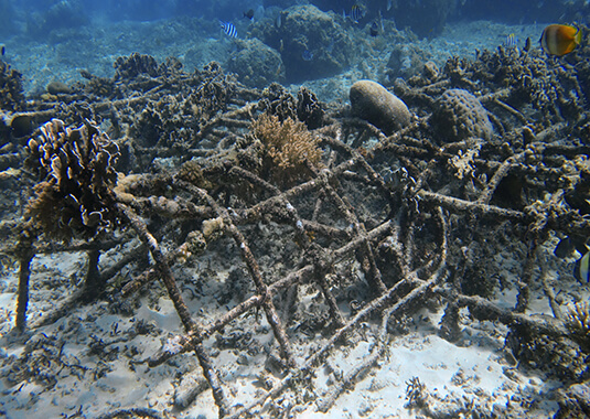Indonésie – Gili Trawangan: Reef Check ou Biorocks, sur 10 jours.