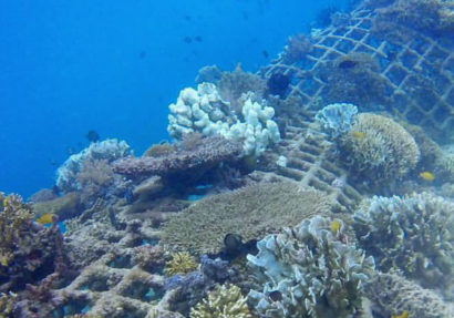 SEA HERITAGE Voyage à destination de  Indonesia - Two islands, two methods, the same goal: reef reconstruction