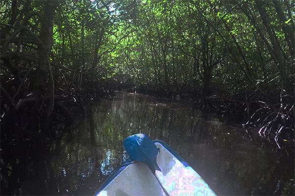 sea-heritage-lembongan-mangrove