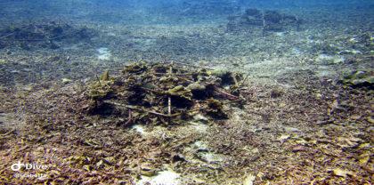 Comment répare-t-on le récif corallien? (suite et fin)