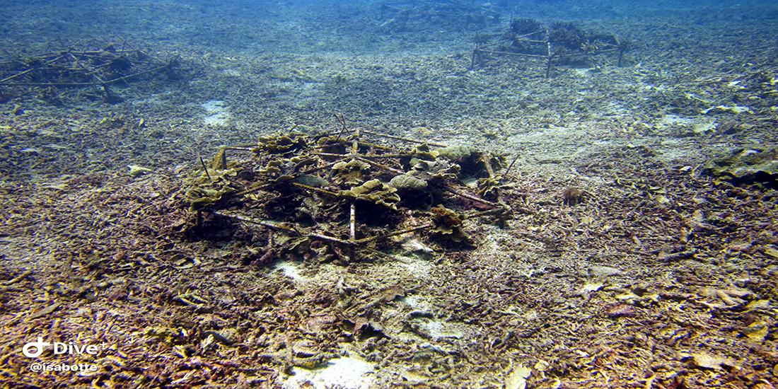 Sea-heritage-blue-corner-lembongan-recif-artificiel