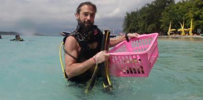 Comment répare-t-on le récif corailien? (2ème partie)