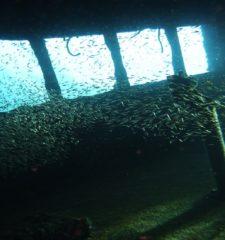 La bataille du Pacifique et les épaves de Coron